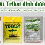 Dat-trong-cay-Tribat