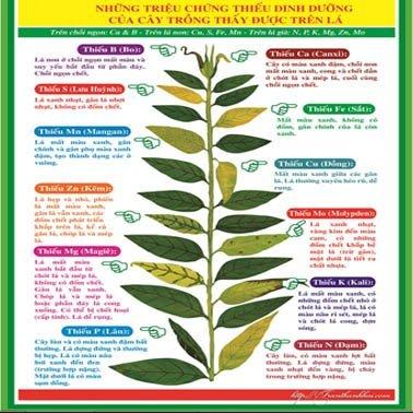 Đất trồng cây bổ sung dinh dưỡng cho cây