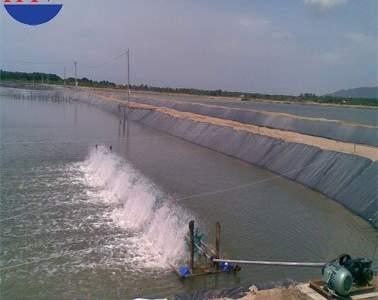 Màng chống thấm HDPE ứng dụng Nuôi trồng thủy sản